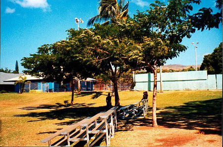 The Trees of Peace at the community center in Kaunakakai, Molokai, 1998.