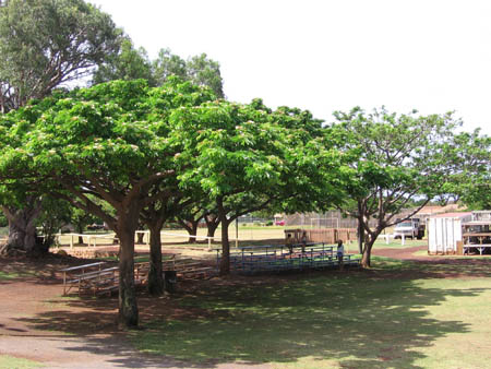 The Molokai Trees of Peace, 2005.