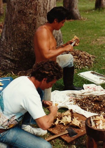 John Stokes and Alapai clean the awa, 1990.