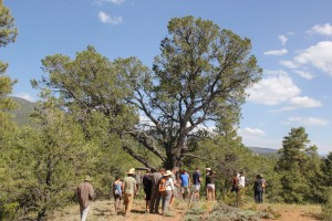 Mentors in the Nurturing the Roots / New Mexico
