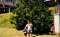 John with his children—Jade (age 5) and Kainoa (7 months)—at the tree 1997.