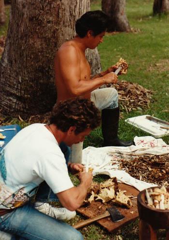 John Stokes and Alapai clean the awa, 1990.